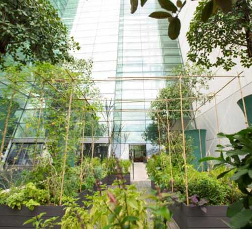 Herb garden at Marina Bay Sands