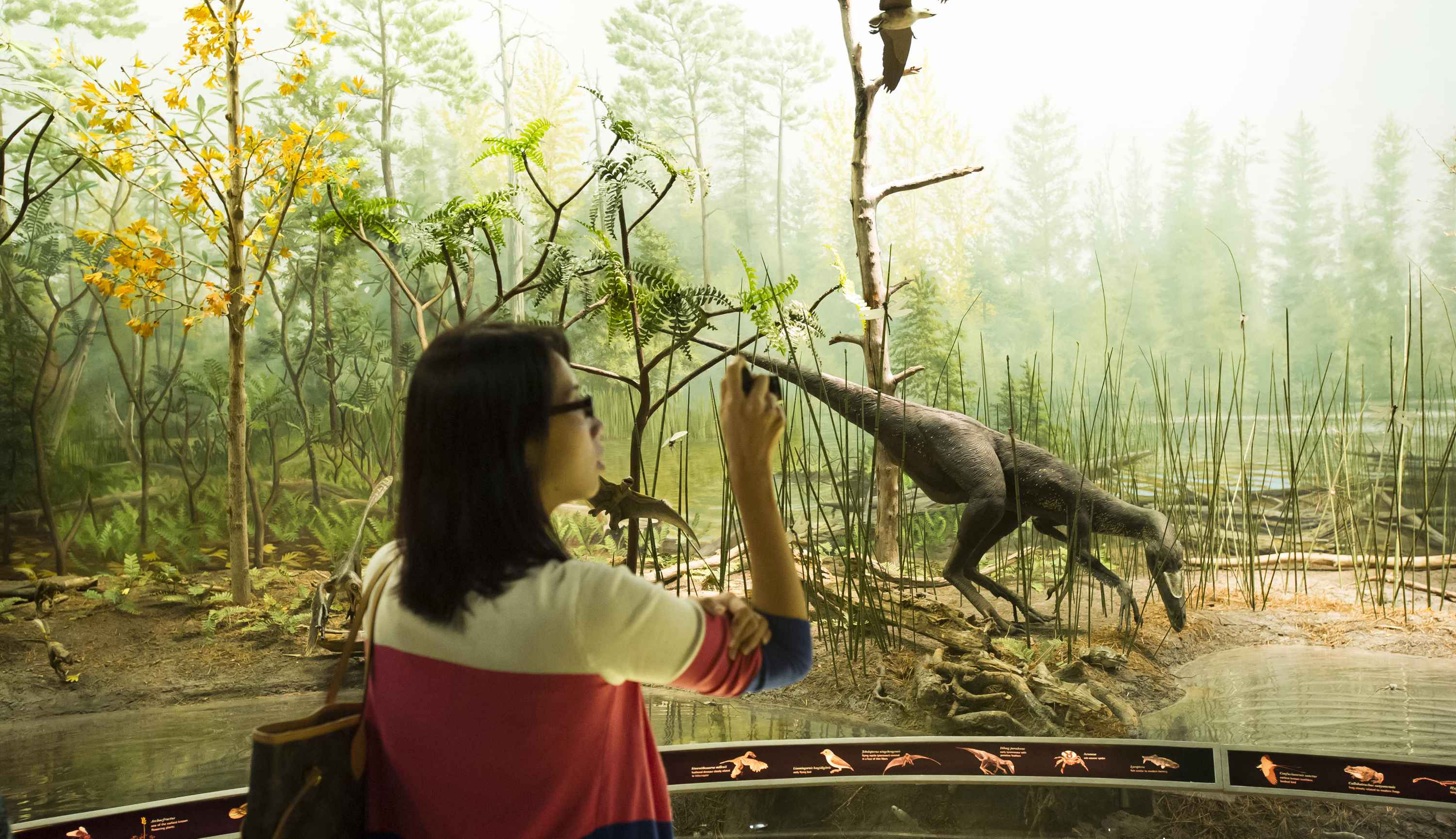 Dinosaurs: Dawn to Extinction Exhibit