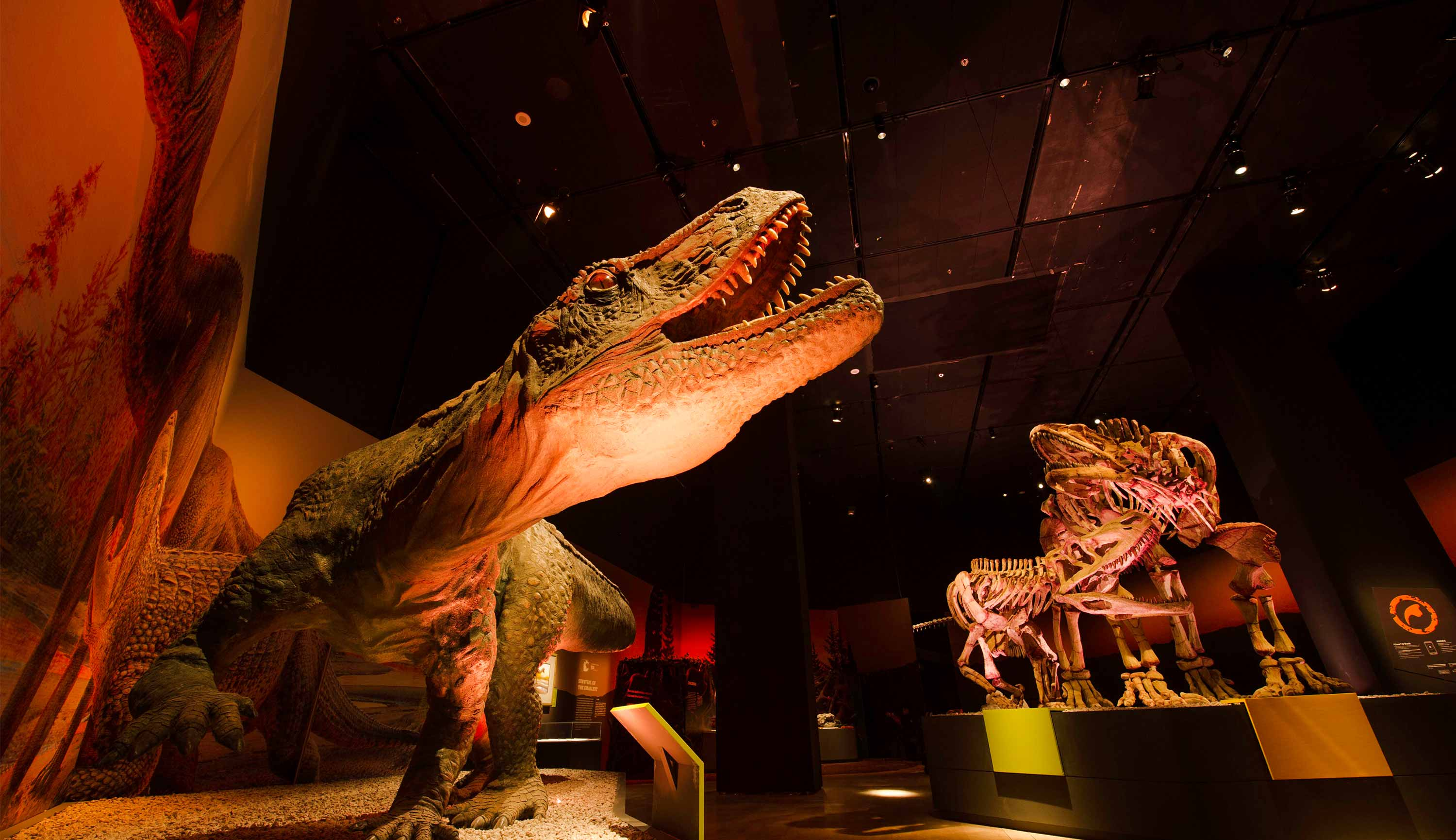 Dinosaurs Dawn to Extinction Exhibit