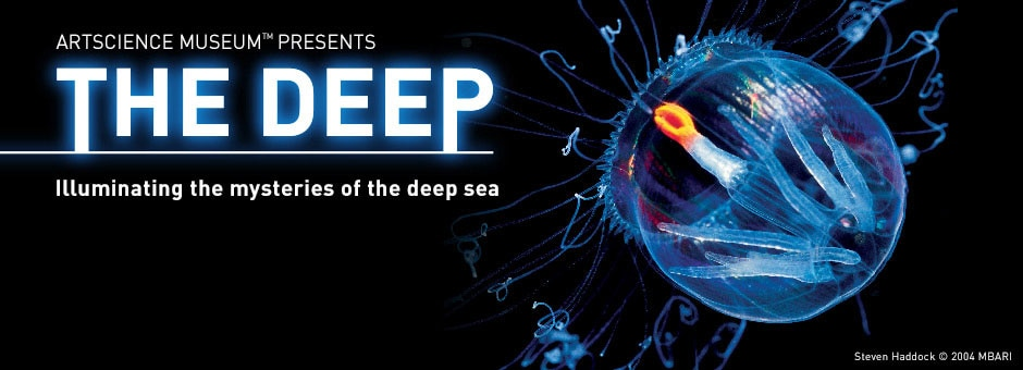 the deep exhibition of deep sea animals collection in