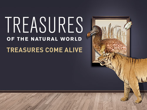 Treasures of the Natural World at ArtScience Museum
