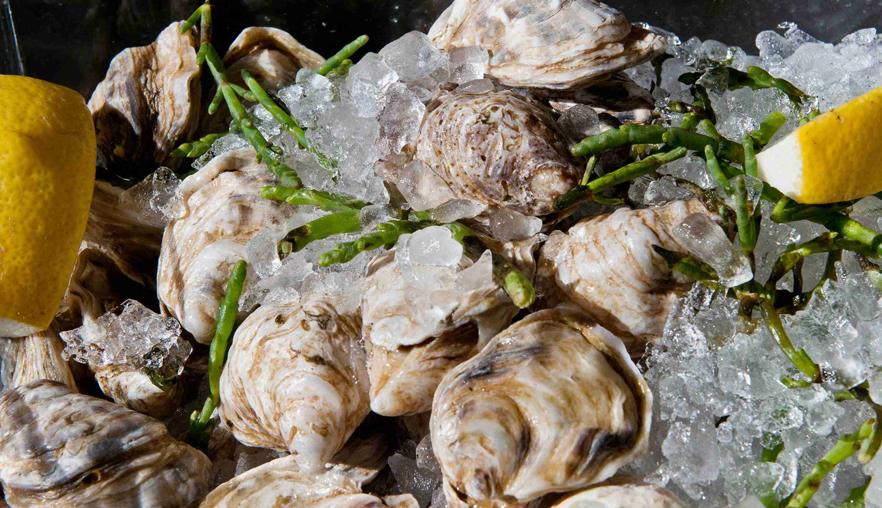 Oysters on Ice at db Bistro and Oyster Bar