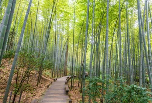 Singapore Walking Trails - Bamboo